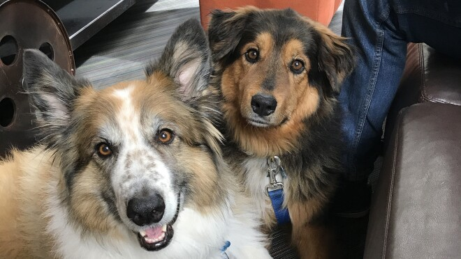 Dogs of Amazon - Bronx and Dory look at the camera