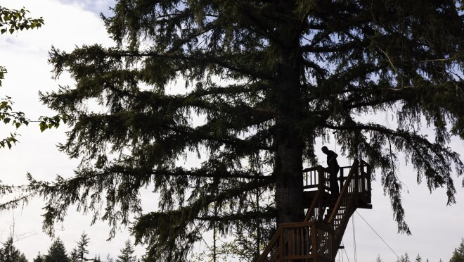 A figure in silhouette at the top of a platform built around a tall tree.