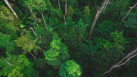 amazon-自然エネルギー推進企業を支援 森林写真