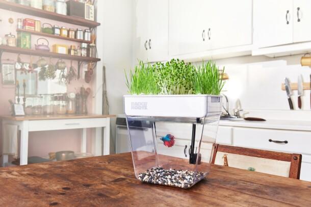 Sustainable small business on Amazon Launchpad