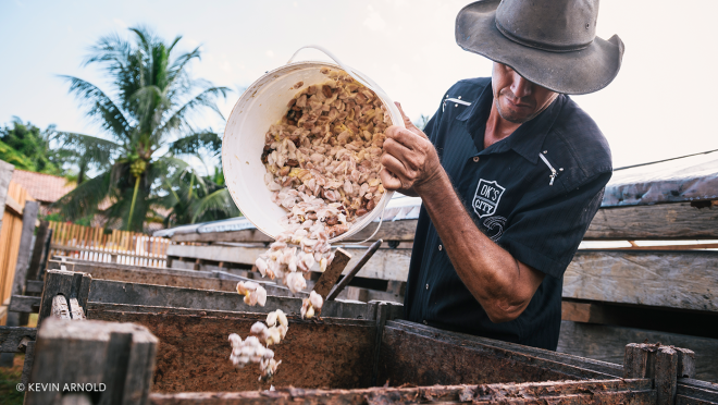 A farmer dumps the cocoa beans into a wooden bin to begin the fermentation and drying process.
