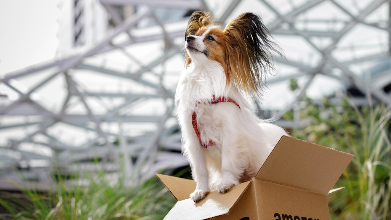 Dog of the Week - Frankie standing in a box