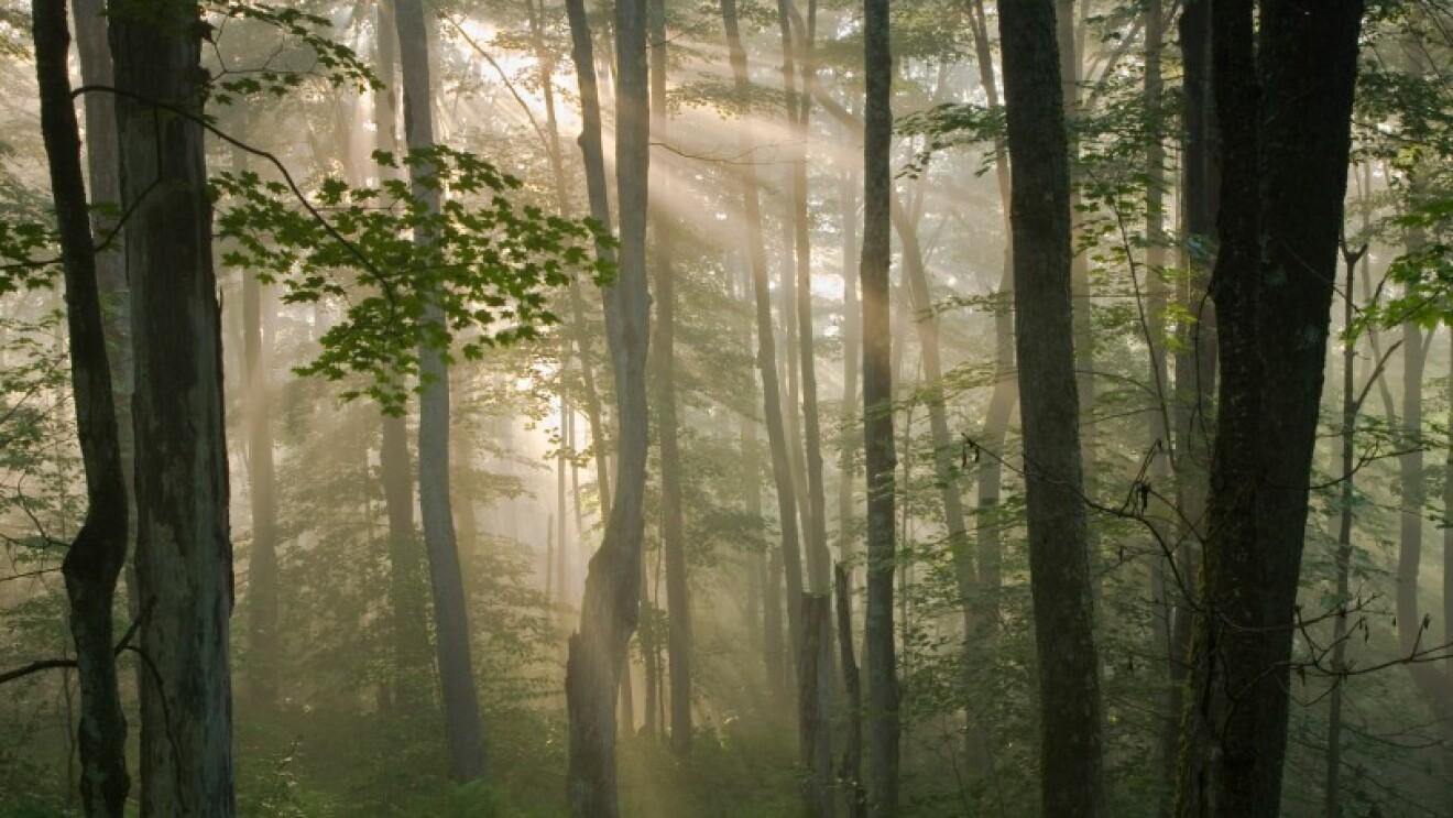 アパラチアン山脈の森林