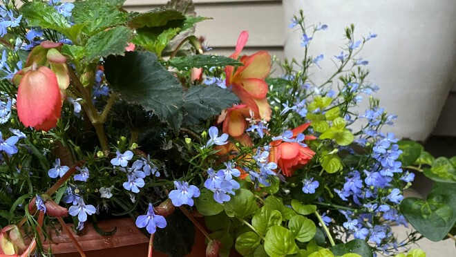 an image of flowers growing out of a planter. There are light purple and orange/pink flowers and green leaves surrounding them.
