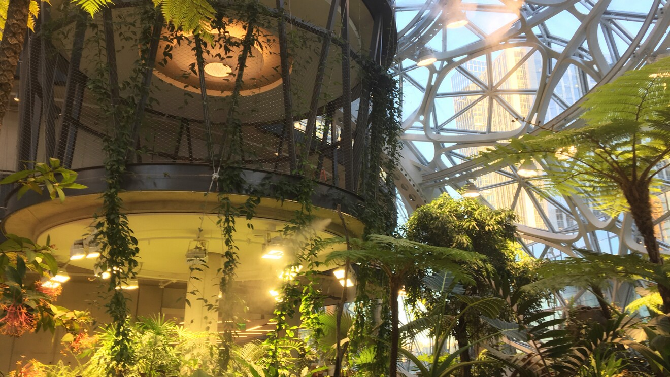 Image from Inside The Seattle Spheres. A raised platform is surrounded by a variety of tropical plants, including ferns, trees, vines and more.