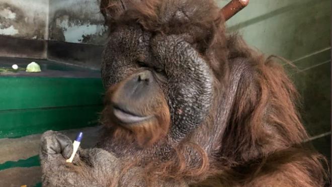 千葉市動物公園に「ほしい物リスト」で贈られたグッズと動物たち