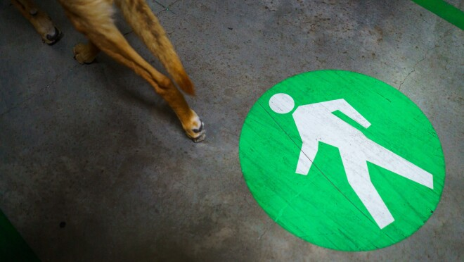A dog's hind legs are photographed next to a painted marker on a concrete floor. The marker shows a human figure inside a green circle.