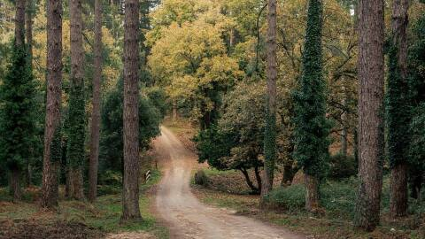 A dirt road that leads into woods with a variety of trees.