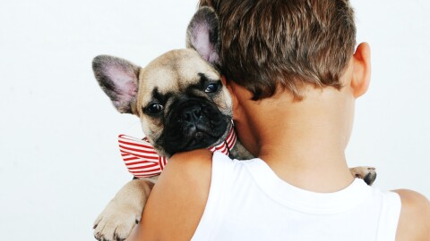 A child holds a French Bulldog puppy over their shoulder