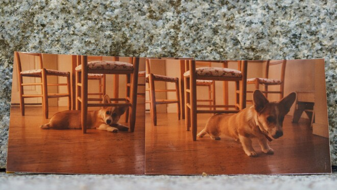 Two photos of Rufus, a Welsh Corgi who was the first dog of Amazon. In one he is lying on the floor underneath a chair. In the other, he appears to be stretching while moving from under the chair.