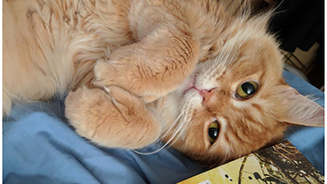 An orange cat lies on its back, next to a book, as it looks up at the camera.