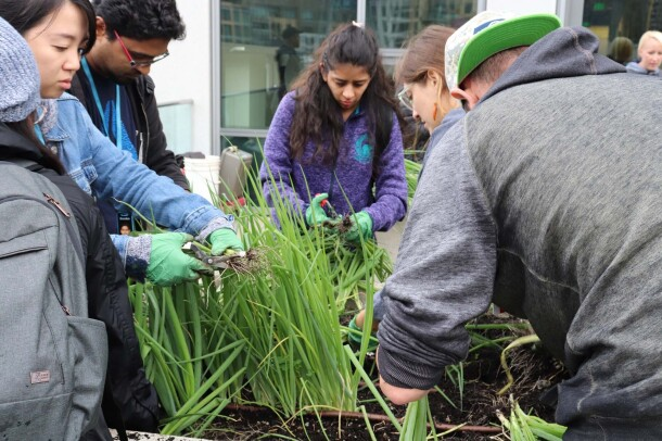 Amazon's rooftop organic vegetable garden, providing the harvest to FareStart restaurant