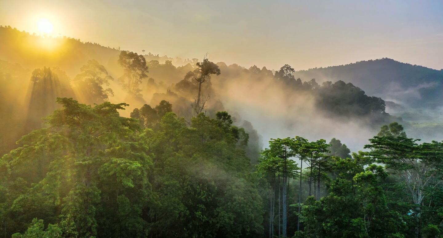 A misty view at sunset over a Borneo rainforest