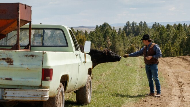 A rancher stands near his weathered light green pickup truck and greets an animal from his herd in Wyoming.