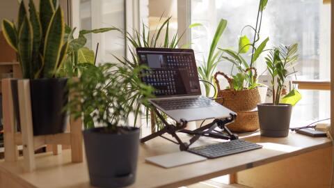 A laptop among green plants