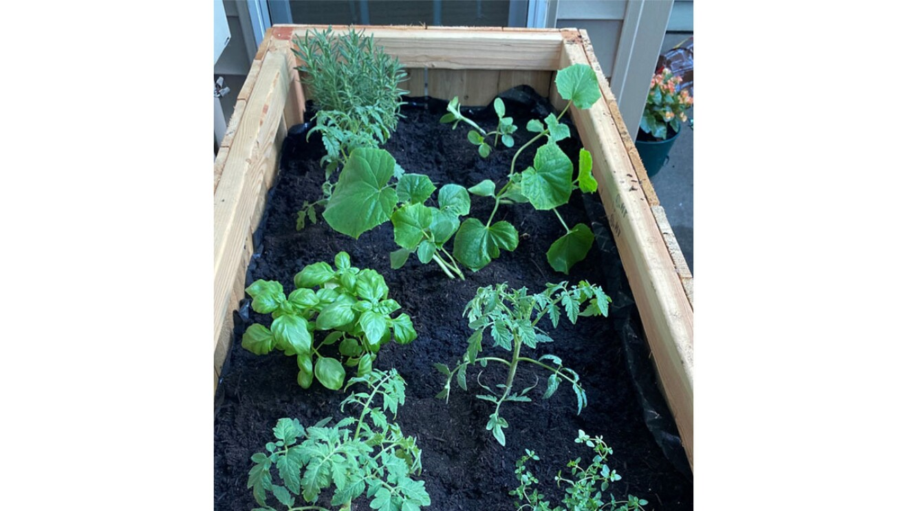 An image of a planter box with dark brown soil and green plants growing out of it.