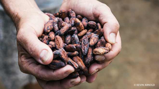 A farmer holds a handful of dried cocoa beans.