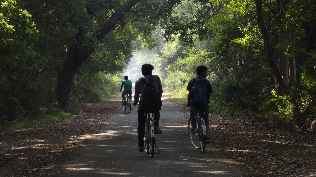 three people cycling in a forest like location