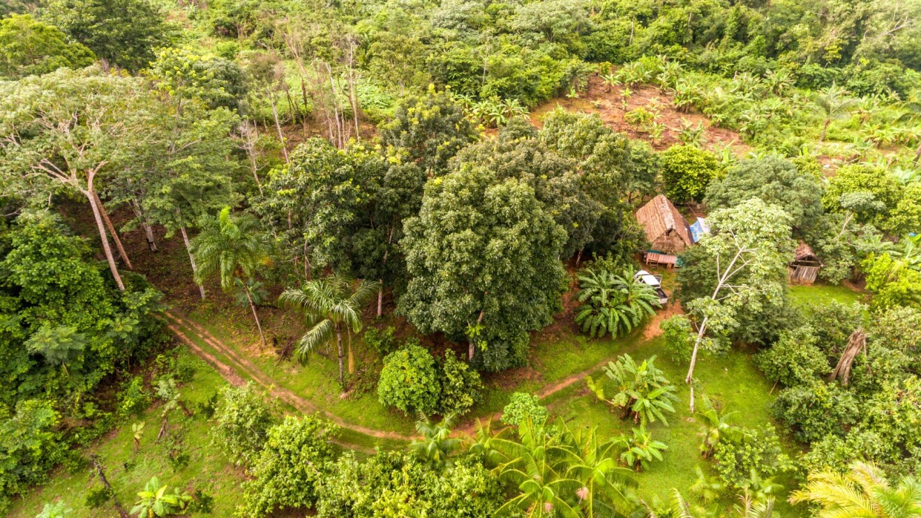 Amazon agroforestry land with a variety of tropical crops including bananas, brazil nuts, papaya, pineapple, yuca, and more.
