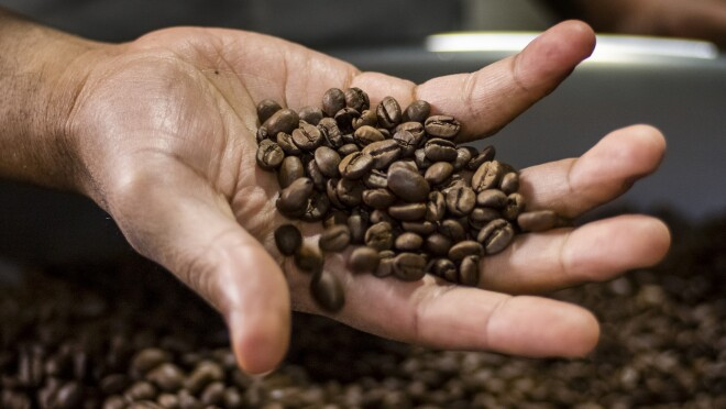 Detail of a person holding whole coffee beans.