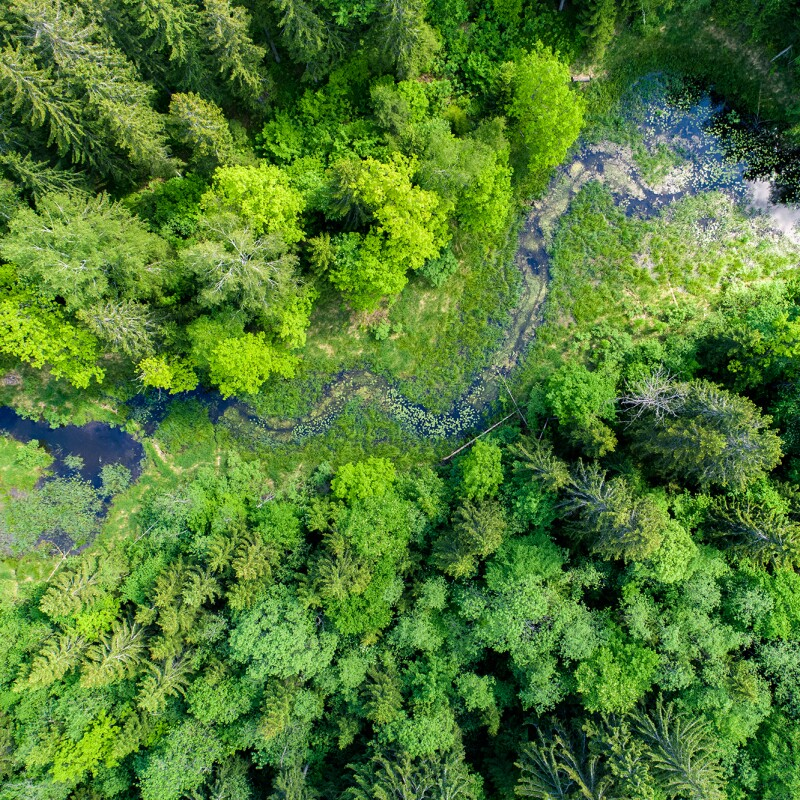 An overhead shot of a wooded area, with a stream running through it.