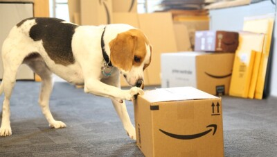 A dog inspects an Amazon package with its paw.