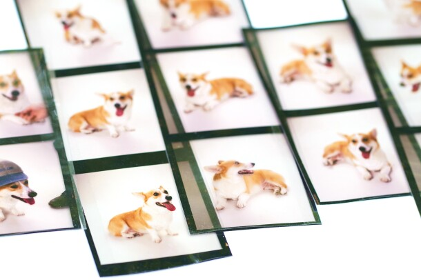 Images of Rufus, a Welsh Corgi, who was the first dog at Amazon.