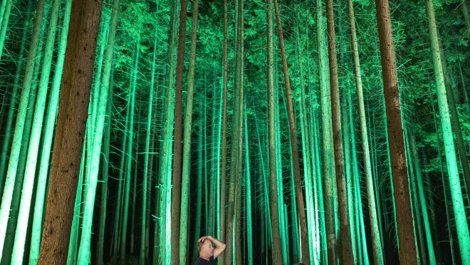 A forest illuminated by green lights towers over one person.