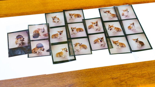 An array of pictures of Rufus, a Welsh Corgi, the first dog of Amazon. The images are all shot on a white background, and range from him posing, lying down, and wearing a baseball cap.