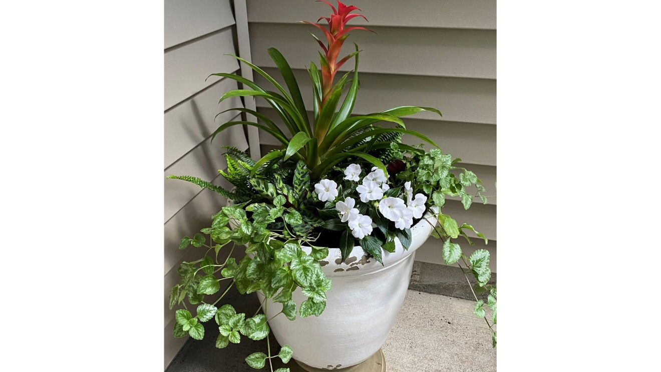 An image of a planter with a tall, orange flower sprouting out the top of it with green plants and white flowers lower in the planter.