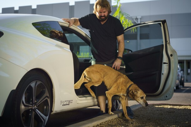 A dog steps out of a parked car. A man holds the door open for her.