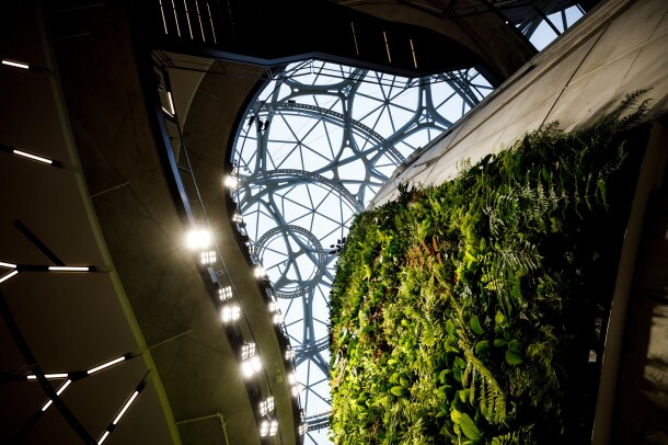 An upward looking view from the ground floor of The Spheres, featuring its unique architecture and plant life.