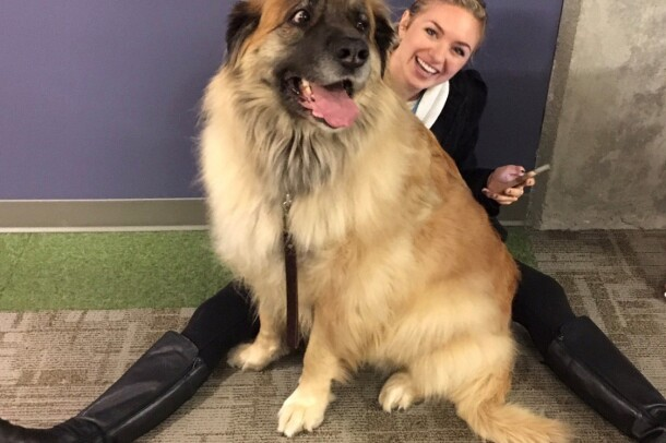 A Leonberger dog looks to the left, with her mouth open, tongue out. She wears a collar and leash and is happily seated on an Amazonian, who sits on the floor.