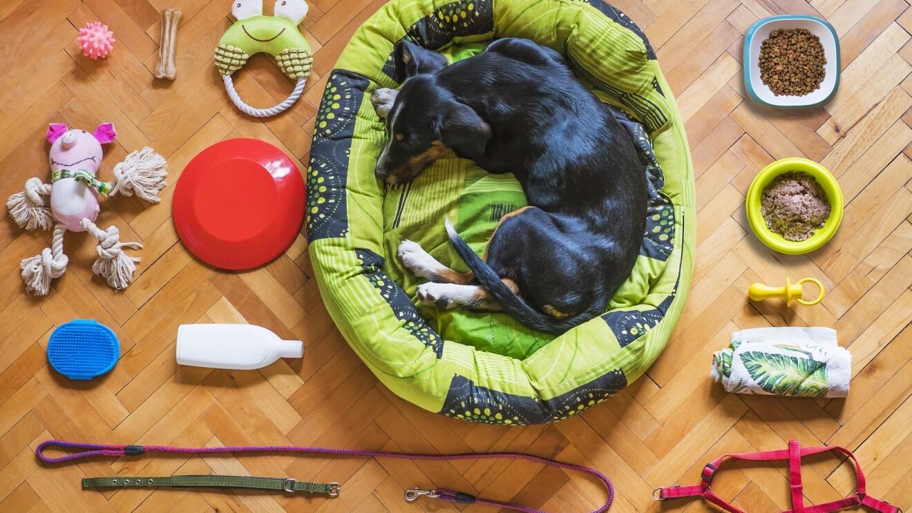 Dog accssories Amazon INdia