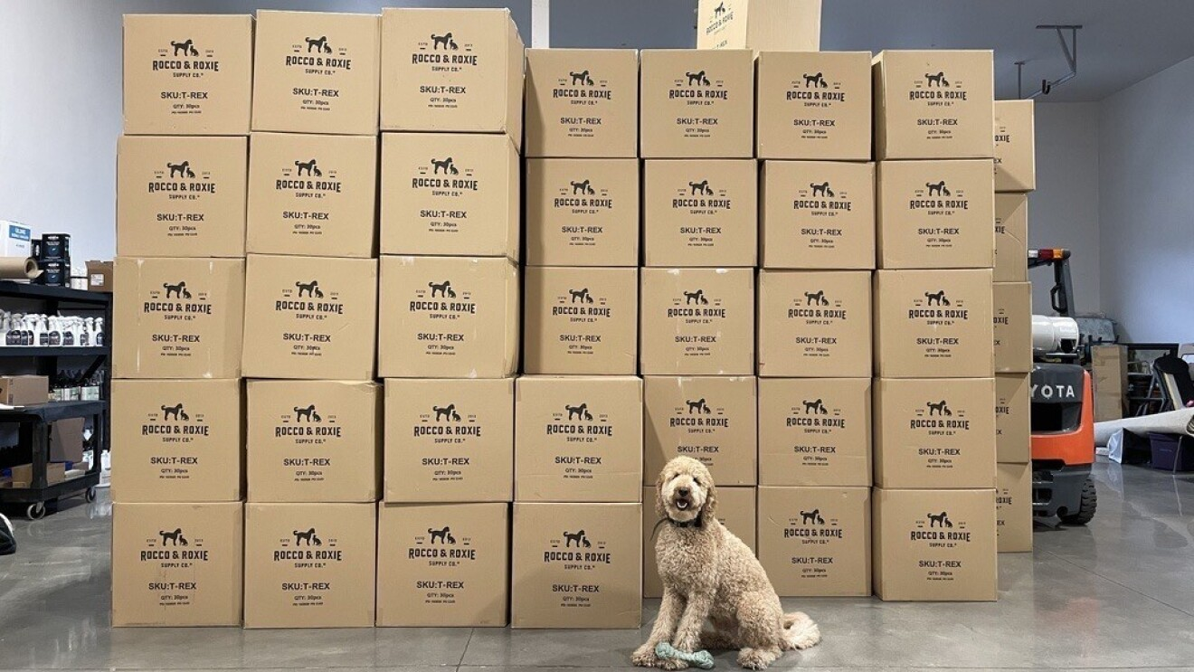 A golden doodle dog sits with a toy in front of a stack of Rocco & Roxie boxes.
