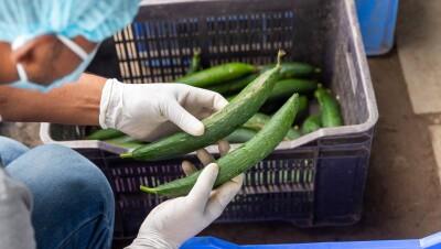 Amazon India - Farm Fresh Veggies