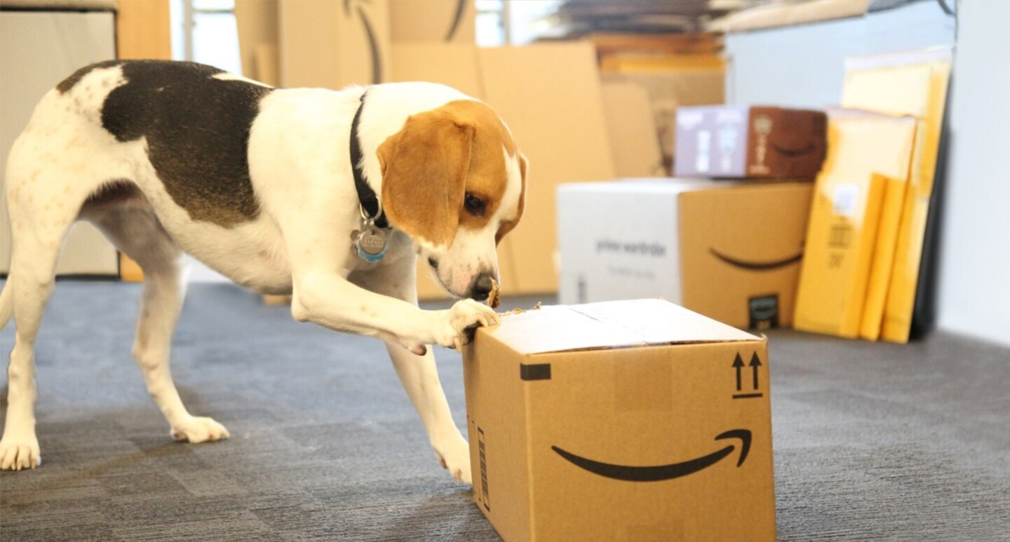 Dog Package Testing