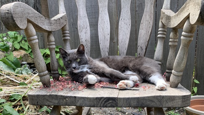 A cat lies on a weathered wooden rocking chair.